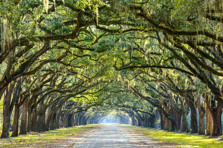 Photo pour Savannah, Georgia, USA oak tree lined road at historic Wormsloe Plantation. - image libre de droit