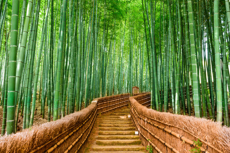 Photo pour Kyoto, Japan at the Bamboo Forest. - image libre de droit