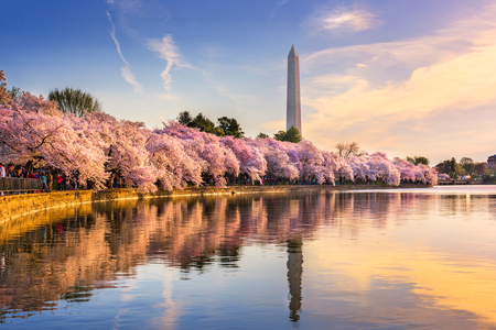 Photo for Washington DC, USA at the tidal basin with Washington Monument in spring season. - Royalty Free Image