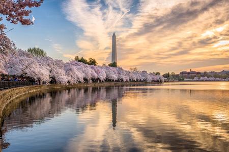 Photo pour Washington DC, USA at the tidal basin with Washington Monument in spring season. - image libre de droit