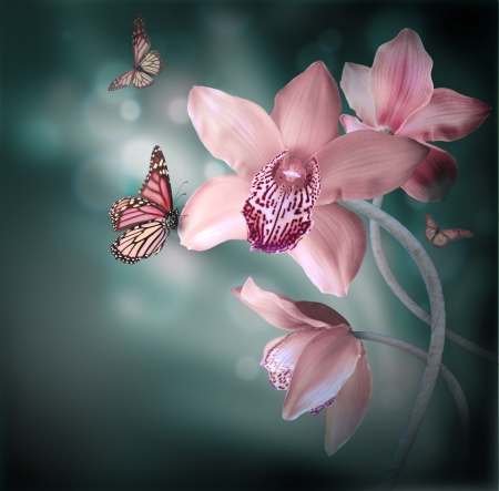 Photo for Orchids with a butterfly on the coloured background - Royalty Free Image
