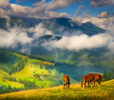 Amazing mountain landscape with fog and horses mural