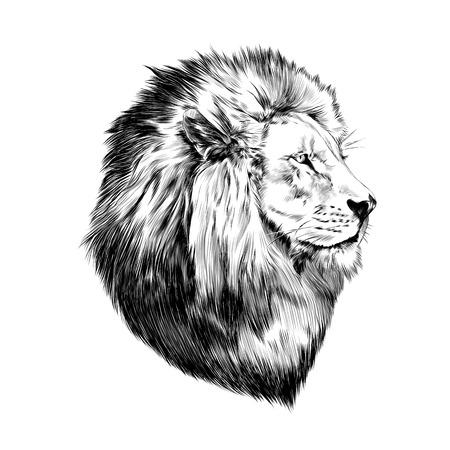 Ilustración de lion proud, face in profile, looking into the distance, sketch, vector, black-and-white drawing - Imagen libre de derechos