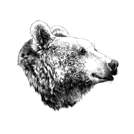 Illustration pour The bear's head profile looking into the distance, sketch vector graphics,  black and white  pattern - image libre de droit