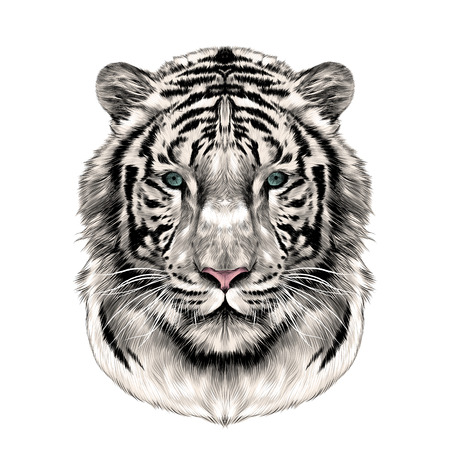Illustration for the head of the white tiger full face symmetrical, sketch vector graphics color picture - Royalty Free Image