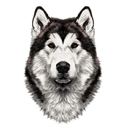 Ilustración de Dog breed Alaskan Malamute head symmetry looks right sketch vector graphics color picture - Imagen libre de derechos