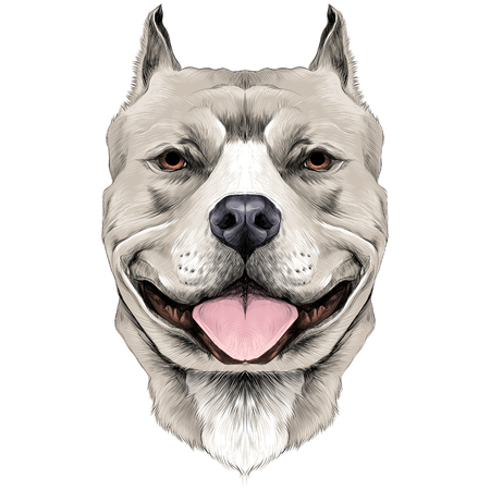 Ilustración de dog breeds the American pit bull Terrier white color head sketch vector graphics color picture - Imagen libre de derechos