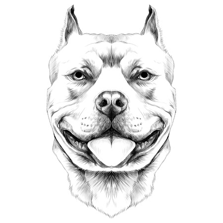 Ilustración de dog breeds the American pit bull Terrier head sketch vector graphics black and white drawing - Imagen libre de derechos