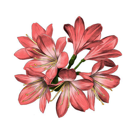 Illustration for Lily bouquet 7 flowers pink sketch vector graphics color picture - Royalty Free Image