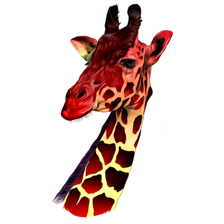 Illustration pour the head of a giraffe sketch vector graphics color drawing of red and yellow - image libre de droit