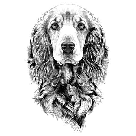 Ilustración de dog breed Cocker Spaniel muzzle, sketch vector graphics black and white drawing - Imagen libre de derechos