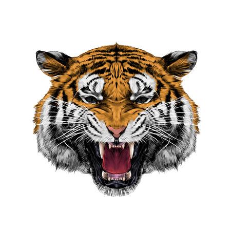 Illustration pour white tiger head growling sketch vector graphics color picture - image libre de droit