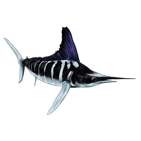 Illustration pour fish blue Marlin, swordfish, pointed toe sailing sketch vector graphics color picture - image libre de droit