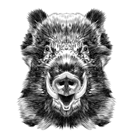 Ilustración de wild boar muzzle with fangs sketch vector graphics black and white drawing - Imagen libre de derechos