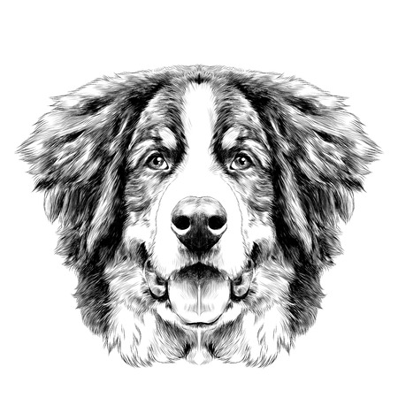 Illustration pour the dog head is symmetrical front the Bernese mountain dog sketch vector black and white drawing - image libre de droit