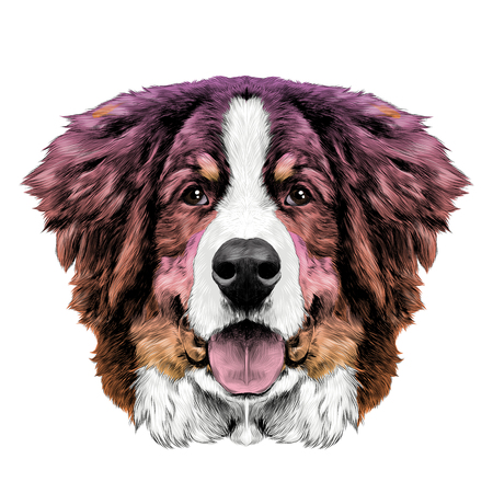 Illustration pour the dog head is symmetrical front the Bernese mountain dog sketch vector color gradient from pink to Oran - image libre de droit