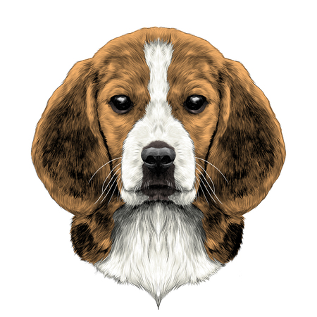 Illustration pour dog head breed Beagle sketch vector graphics color picture - image libre de droit