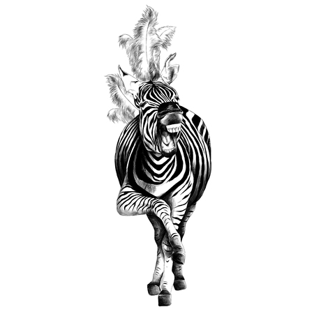 Illustration pour Zebra full height illustration. - image libre de droit