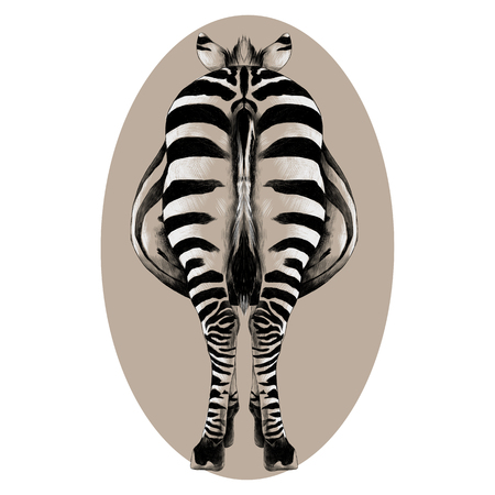 Ilustración de Zebra is back in a full-length illustration. - Imagen libre de derechos