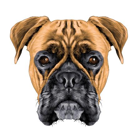 Illustration pour A head of a boxer dog colored sketch - image libre de droit