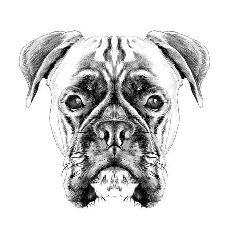 Illustration pour the head of the dog breed boxer dog collar c a vector sketch graphics black and white illustration monochrome - image libre de droit