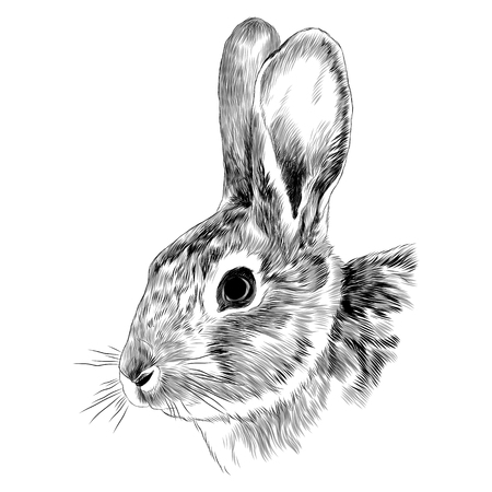 Illustration pour Bunny head sketch graphics illustration. - image libre de droit