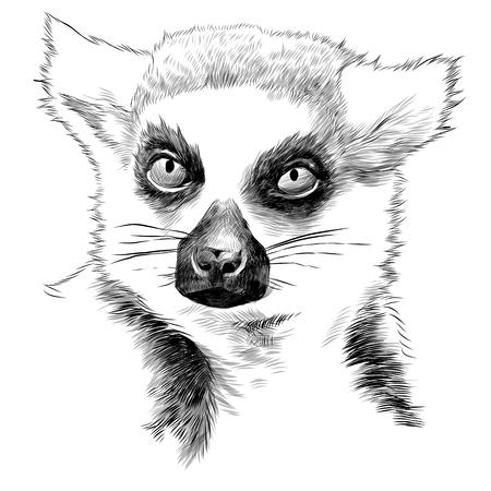 Illustration pour Lemur head sketch graphics illustration. - image libre de droit