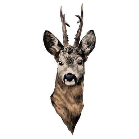 Illustration pour Deer sketch graphic illustration. - image libre de droit