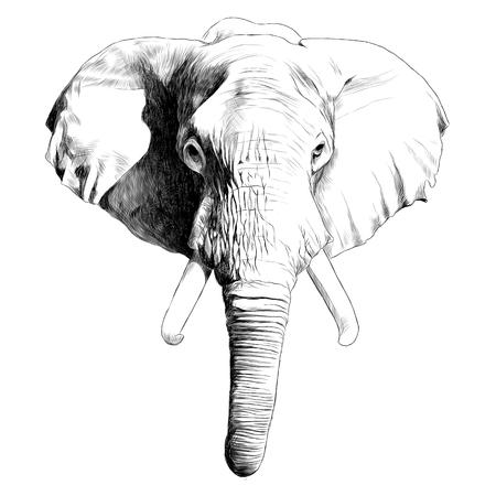 Ilustración de Elephant head sketch graphic illustration. - Imagen libre de derechos