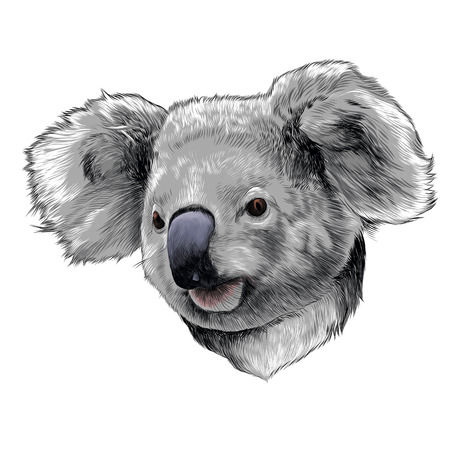 Illustration pour Koala head colored drawing sketch graphic illustration. - image libre de droit
