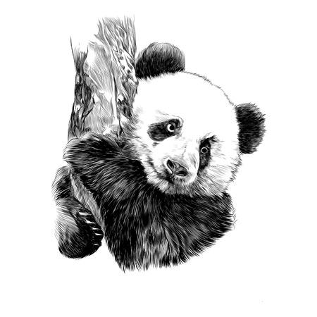 Illustration pour Panda sketch graphic design. - image libre de droit