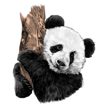 Illustration pour Panda sketch sketch graphic design. - image libre de droit