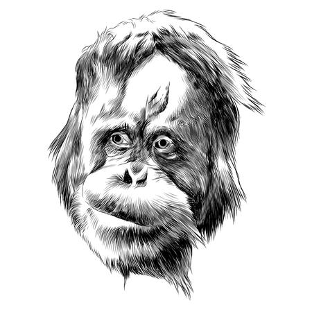 Illustration pour Orangutan monkey sketch graphic design. - image libre de droit