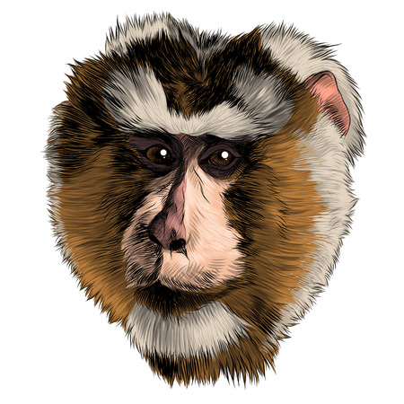 Illustration for Monkey head sketch graphic design. - Royalty Free Image