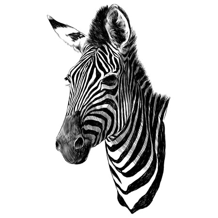 Illustration pour Zebra head sketch graphic design. - image libre de droit