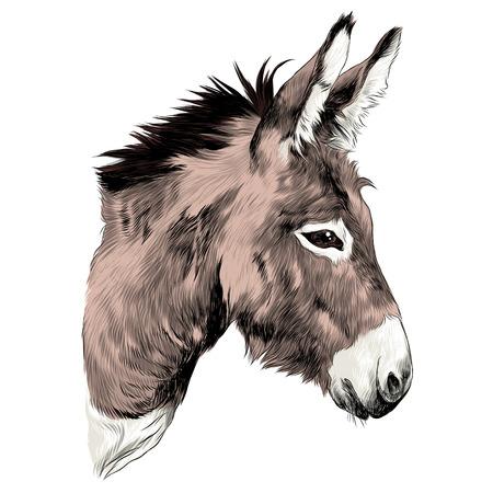 Illustration for Donkey sketch graphic design. - Royalty Free Image