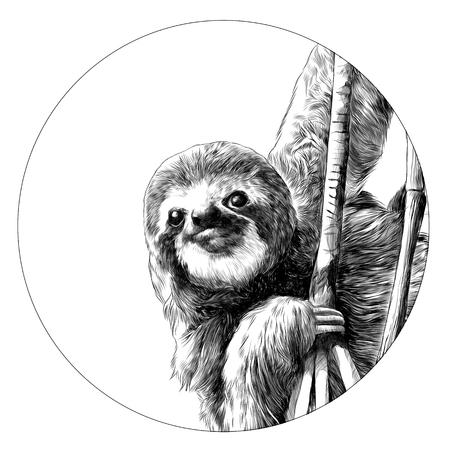 Illustration pour Sloth sketch graphic design. - image libre de droit