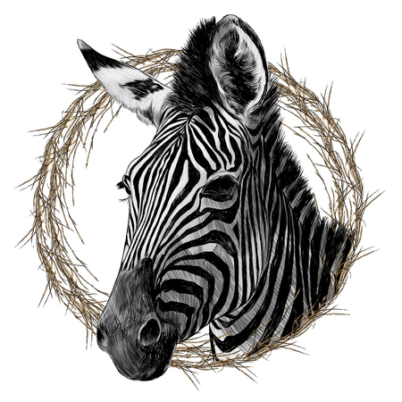 Illustration pour Zebra head framed sketch graphic design. - image libre de droit