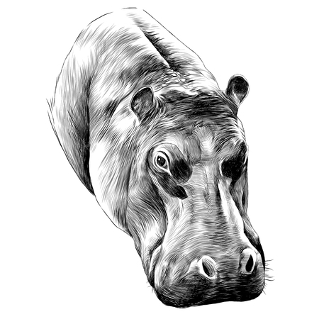 Illustration for Hippo sketch graphic design. - Royalty Free Image