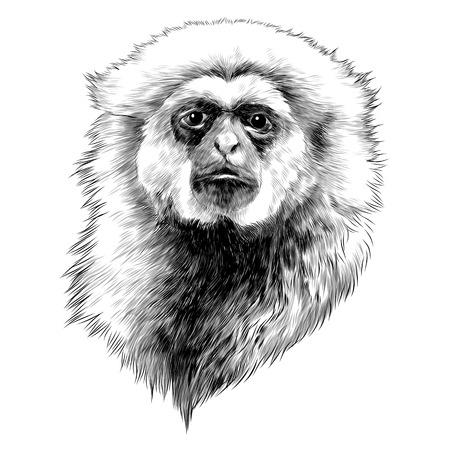 Illustration for Gibbon monkey sketch graphic design. - Royalty Free Image
