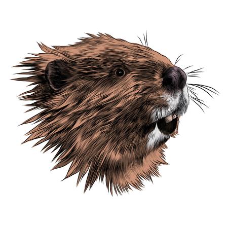 Ilustración de Beaver sketch graphic design. - Imagen libre de derechos