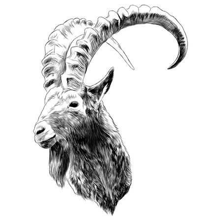Illustration pour Goat sketch graphic design. - image libre de droit