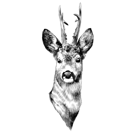 Illustration pour Deer sketch graphic design. - image libre de droit