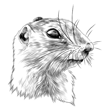 Illustration pour Gopher sketch graphic design. - image libre de droit