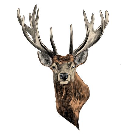 Illustration pour Stag deer head sketch graphic design. - image libre de droit