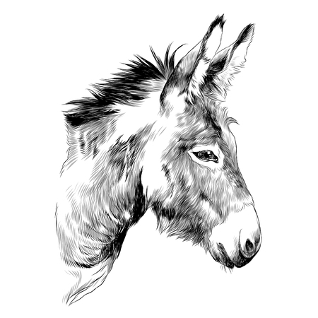 Illustration pour Donkey sketch graphic design. - image libre de droit