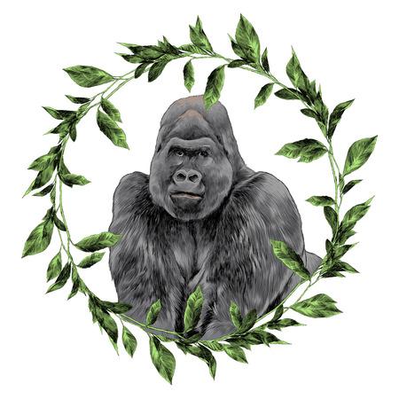 Illustration for Gorilla in the frame sketch graphic design. - Royalty Free Image