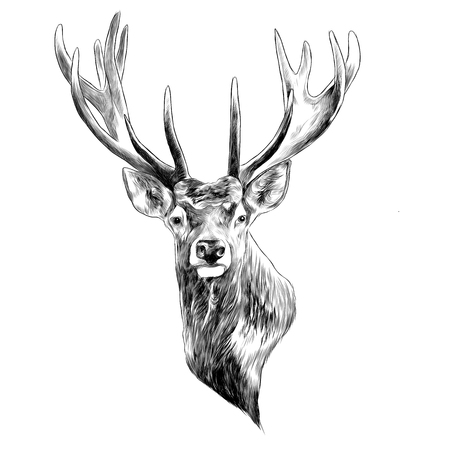 Illustration for Stag deer head sketch graphic design. - Royalty Free Image