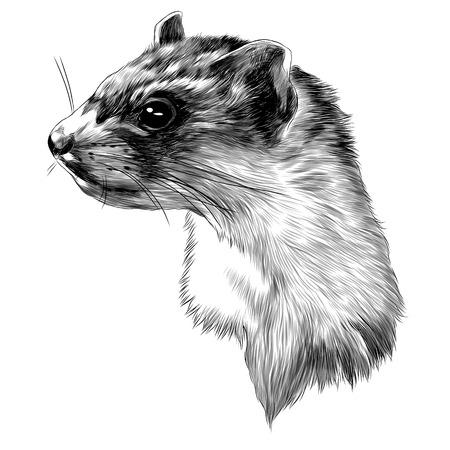 Illustrazione per Ferret head sketch graphic design. - Immagini Royalty Free