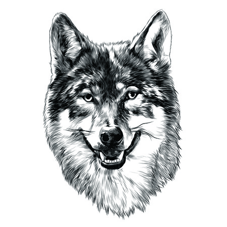 Illustration for Wolf head sketch graphic design. - Royalty Free Image